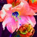 Mr. Flower